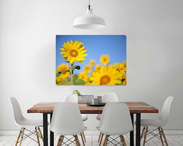 canvastaulu-malli-auringonkukkapelto
