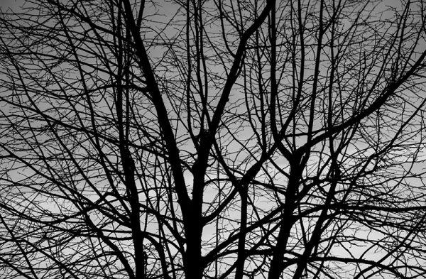 canvastaulu-tammikuun-taivas-bw-main